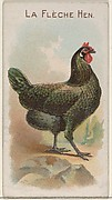 La Flèche Hen, from the Prize and Game Chickens series (N20) for Allen & Ginter Cigarettes