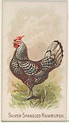 Silver-Spangled Hamburgh, from the Prize and Game Chickens series (N20) for Allen & Ginter Cigarettes