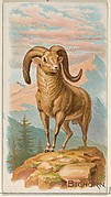 Bighorn, from the Quadrupeds series (N21) for Allen & Ginter Cigarettes