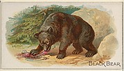 Black Bear, from the Quadrupeds series (N21) for Allen & Ginter Cigarettes