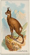 Chamois, from the Quadrupeds series (N21) for Allen & Ginter Cigarettes