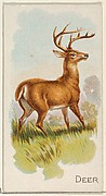 Deer, from the Quadrupeds series (N21) for Allen & Ginter Cigarettes