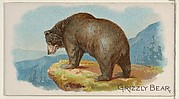 Grizzly Bear, from the Quadrupeds series (N21) for Allen & Ginter Cigarettes