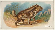 Hyena, from the Quadrupeds series (N21) for Allen & Ginter Cigarettes
