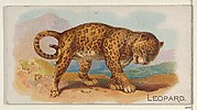 Leopard, from the Quadrupeds series (N21) for Allen & Ginter Cigarettes