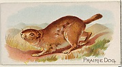 Prairie Dog, from the Quadrupeds series (N21) for Allen & Ginter Cigarettes