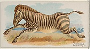 Zebra, from the Quadrupeds series (N21) for Allen & Ginter Cigarettes