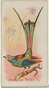 Abyssinian Roller, from the Song Birds of the World series (N23) for Allen & Ginter Cigarettes