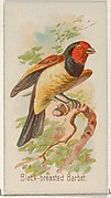 Black-breasted Barbet, from the Song Birds of the World series (N23) for Allen & Ginter Cigarettes