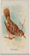 Nightingale, from the Song Birds of the World series (N23) for Allen & Ginter Cigarettes