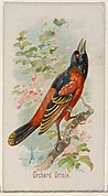 Orchard Oriole, from the Song Birds of the World series (N23) for Allen & Ginter Cigarettes