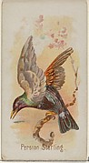 Persian Starling, from the Song Birds of the World series (N23) for Allen & Ginter Cigarettes