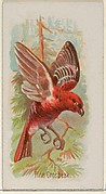 Pine Grosbeak, from the Song Birds of the World series (N23) for Allen & Ginter Cigarettes
