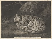 A Sleeping Leopard