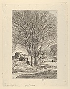 Maples in Early Spring