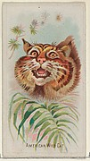 American Wild Cat, from the Wild Animals of the World series (N25) for Allen & Ginter Cigarettes