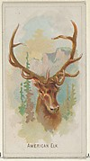 American Elk, from the Wild Animals of the World series (N25) for Allen & Ginter Cigarettes