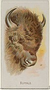 Buffalo, from the Wild Animals of the World series (N25) for Allen & Ginter Cigarettes