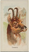Chamois, from the Wild Animals of the World series (N25) for Allen & Ginter Cigarettes