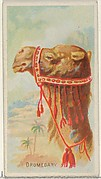 Dromedary, from the Wild Animals of the World series (N25) for Allen & Ginter Cigarettes