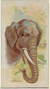Elephant, from the Wild Animals of the World series (N25) for Allen & Ginter Cigarettes