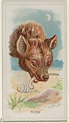 Hyena, from the Wild Animals of the World series (N25) for Allen & Ginter Cigarettes