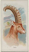 Ibex, from the Wild Animals of the World series (N25) for Allen & Ginter Cigarettes