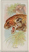 Jaguar, from the Wild Animals of the World series (N25) for Allen & Ginter Cigarettes