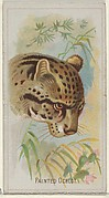 Painted Ocelot, from the Wild Animals of the World series (N25) for Allen & Ginter Cigarettes