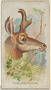 Prong-Horn Antelope, from the Wild Animals of the World series (N25) for Allen & Ginter Cigarettes