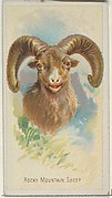 Rocky Mountain Sheep, from the Wild Animals of the World series (N25) for Allen & Ginter Cigarettes