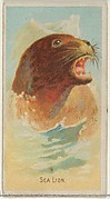 Sea Lion, from the Wild Animals of the World series (N25) for Allen & Ginter Cigarettes