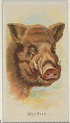 Wild Boar, from the Wild Animals of the World series (N25) for Allen & Ginter Cigarettes
