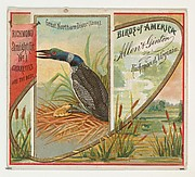 Great Northern Diver (Loon), from the Birds of America series (N37) for Allen & Ginter Cigarettes