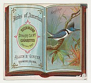 Kingfisher, from the Birds of America series (N37) for Allen & Ginter Cigarettes