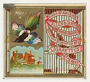 Magpie, from the Birds of America series (N37) for Allen & Ginter Cigarettes