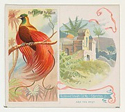 Red Bird of Paradise, from Birds of the Tropics series (N38) for Allen & Ginter Cigarettes
