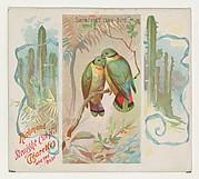 Swintern's Love-bird, from Birds of the Tropics series (N38) for Allen & Ginter Cigarettes