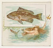 Grouper, from Fish from American Waters series (N39) for Allen & Ginter Cigarettes