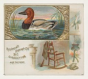 Canvas-Back Duck, from the Game Birds series (N40) for Allen & Ginter Cigarettes