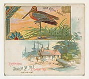 Great Marbled Godwit, from the Game Birds series (N40) for Allen & Ginter Cigarettes
