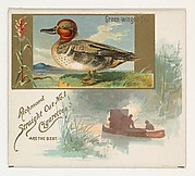 Green-winged Teal, from the Game Birds series (N40) for Allen & Ginter Cigarettes