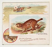 Prairie Dog, from Quadrupeds series (N41) for Allen & Ginter Cigarettes