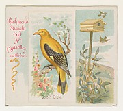 Golden Oriole, from the Song Birds of the World series (N42) for Allen & Ginter Cigarettes