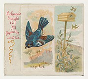 Indigo Bird, from the Song Birds of the World series (N42) for Allen & Ginter Cigarettes