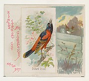 Orchard Oriole, from the Song Birds of the World series (N42) for Allen & Ginter Cigarettes