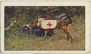 Card No. 88, A Canine Member of the French Red Cross, from the World War I Scenes series (T121) issued by Sweet Caporal Cigarettes