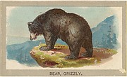 Grizzly Bear, from the Animals of the World series (T180), issued by Abdul Cigarettes
