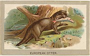 European Otter, from the Animals of the World series (T180), issued by Abdul Cigarettes