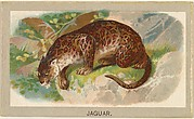 Jaguar, from the Animals of the World series (T180), issued by Abdul Cigarettes